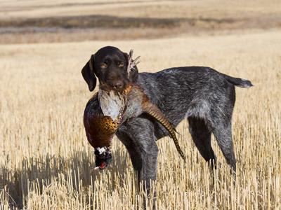 hunting-club-insurance