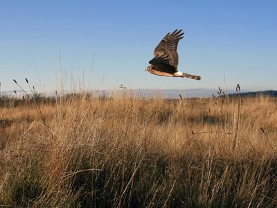 wildlife-conservation-club-insurance